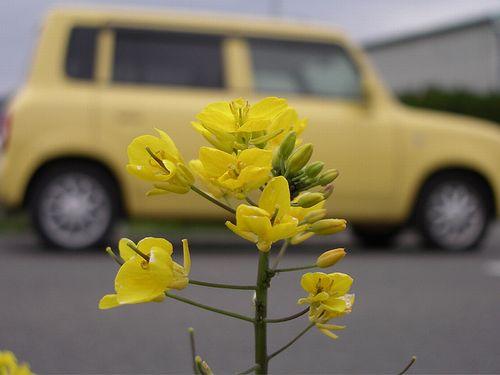 地域の「資源循環サイクル」づくりを目指す「菜の花プロジェクト」